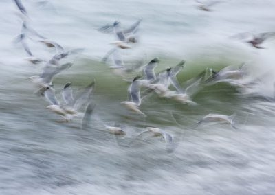 Over a Breaking Wave by Olive Gaughan