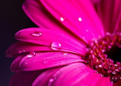 Droplet by Gillian Jones