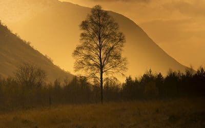 A Tree at Sunset by Colin Ball