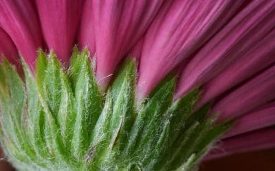 Hairy Flower by Barry Dillon
