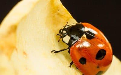 Ladybird by Debbie McHugh