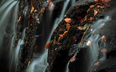 Autumn Jewels by Dermot Staunton