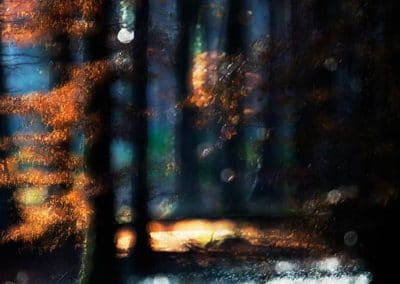 The Magic Forest by Olive Gaughan