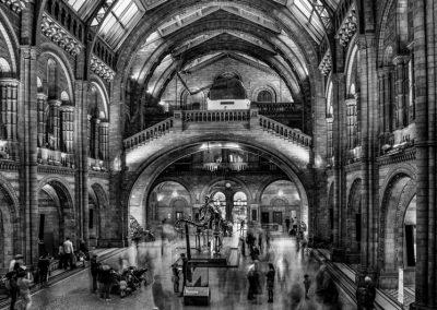 London Natural History Museum by Robert Hackett