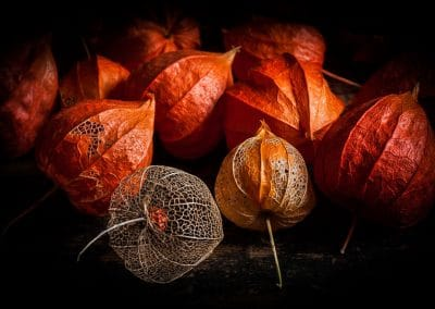 The Fruits of Time by Mary Hann