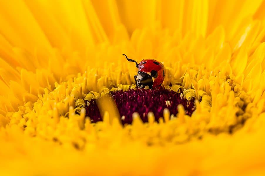 WWM May 2014 – Floral Macro