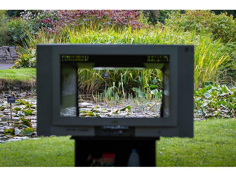 Live Stream Nature Channel (Artist Claire Halpin & Madelaine Hellier) by Ken Dobson