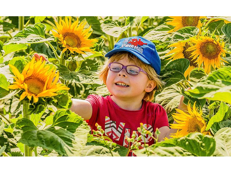 3. Rob Hackett – Roisín in Sunflowers