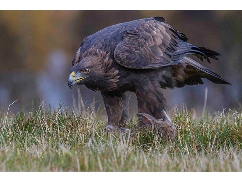 7. Mike Smith – Golden Eagle
