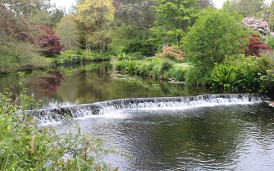 Club Outing – Mount Usher