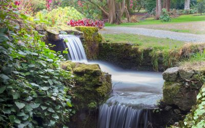 SWM May 2018 – Kilmacurragh National Gardens, County Wicklow